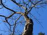 의사가 싫어하는 나무, 응석사 무환자나무를 찾아