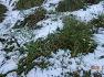 눈 온날 안양천 산책길.