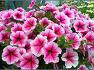 아름다운 봄꽃 모음