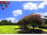 배롱나무(백일홍)