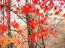 가을은 참이쁘다....만추의 가을