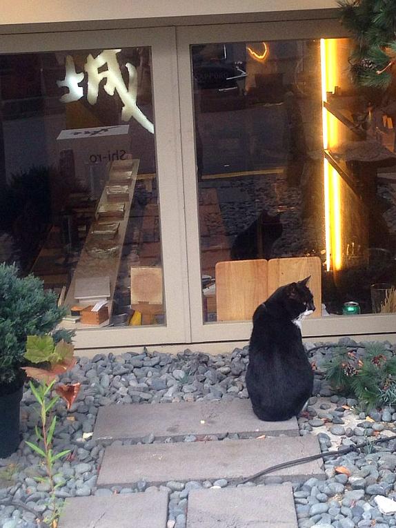 스시를 먹고 싶은 길고양이...